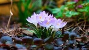 free spring screensavers and wallpaper spring white flowers spiritview