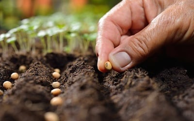 Planting your spring garden