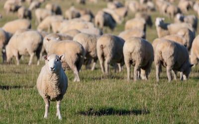 Breaking away from the herd instinct
