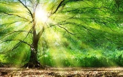 God's man is not on a genealogy tree